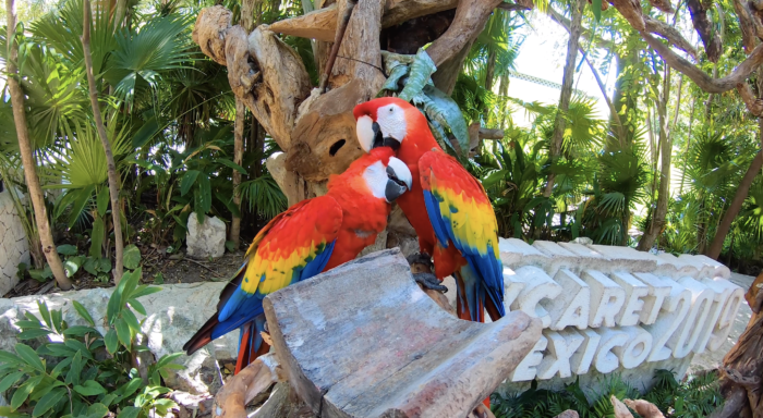 mimionthego-parrots-xcaret-mexico