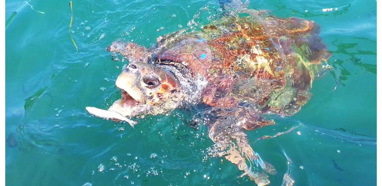 mimionthego-tartarughe-cefalonia